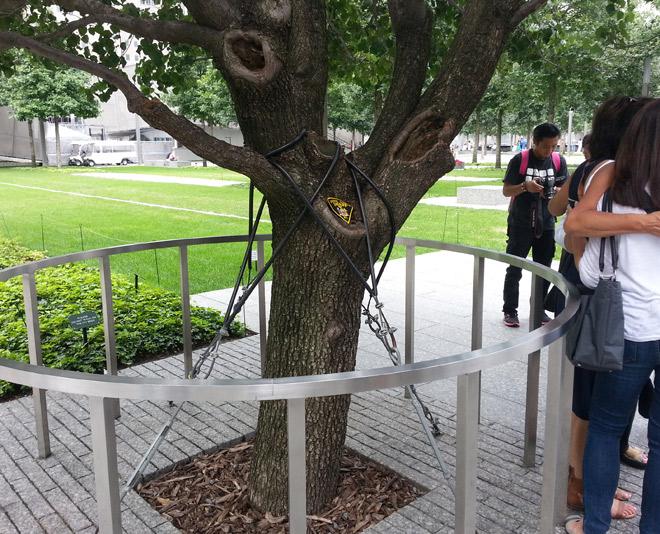 WTC survivor tree